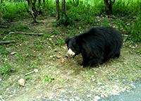 Ratan Mahal Sloth Bear Sanctuary-Champaner-Vadodara