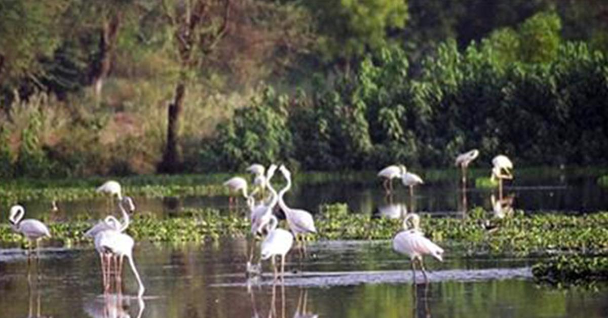 Jambughoda Wildlife Sanctuary-Champaner Vadodara